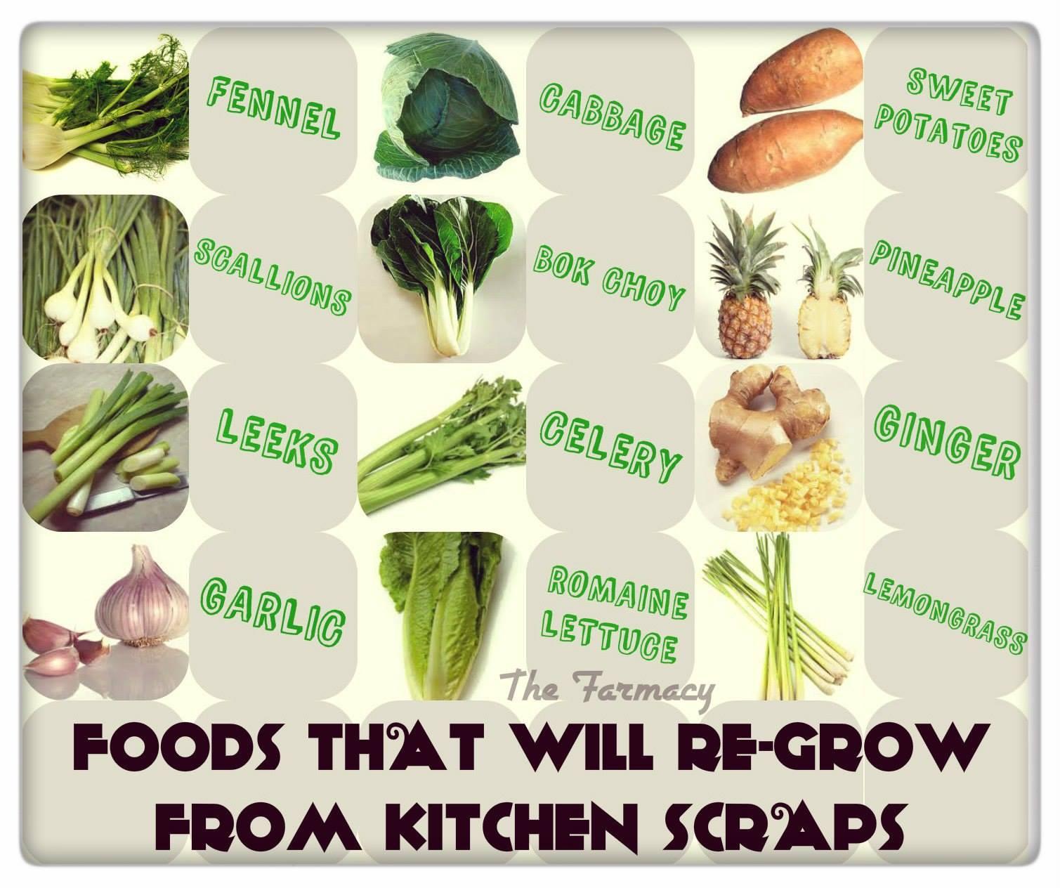 37 Kitchen Scraps You Can Regrow: Bli En Vaken Konsument!