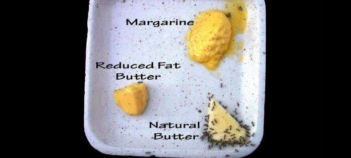smör vs margarin