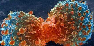 Cancerbehandling tumörer stamcancerceller typerna av cancer Rigvir Sven Erik Nordin