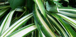 krukväxter Växter som rensar