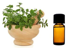 organo-oil-växt-ört