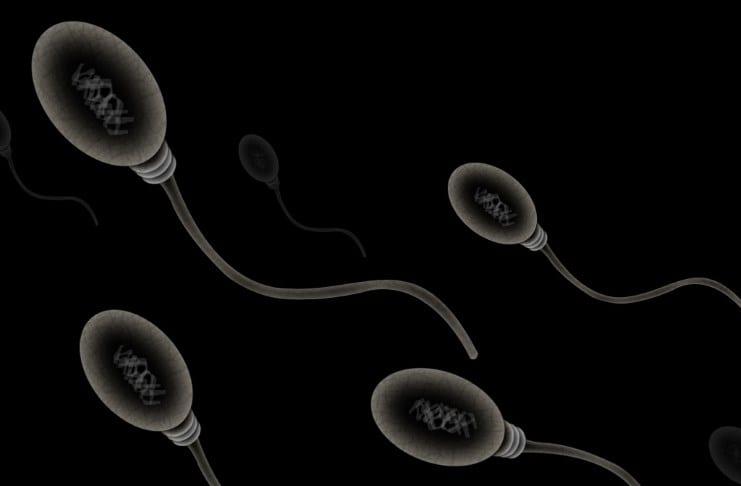 spermier